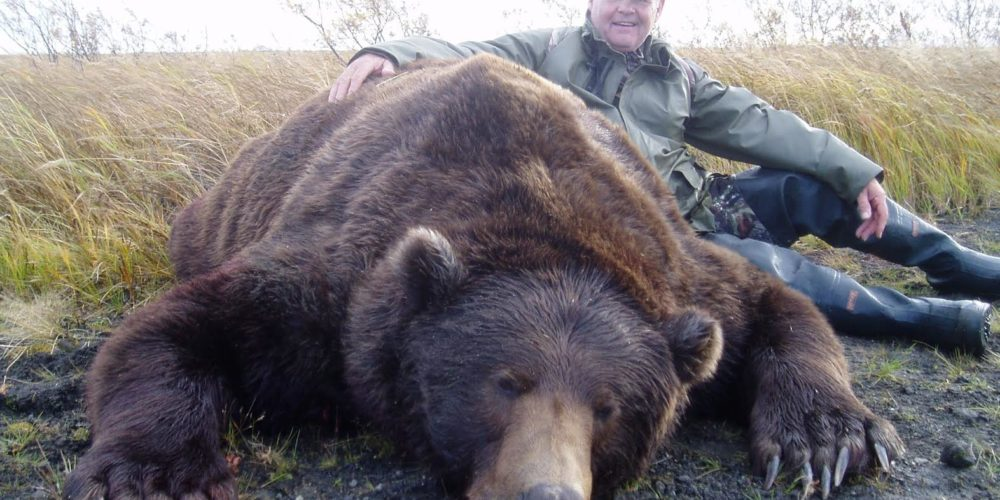 A huge Fall Brown bear hunted on the Alaska Peninsula