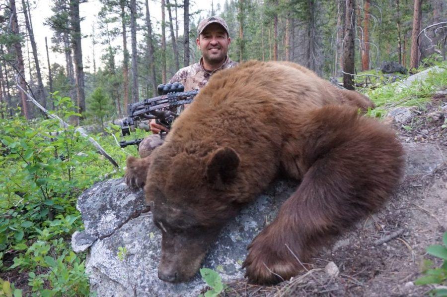 Cory Arrows an Ancient Idaho Black Bear