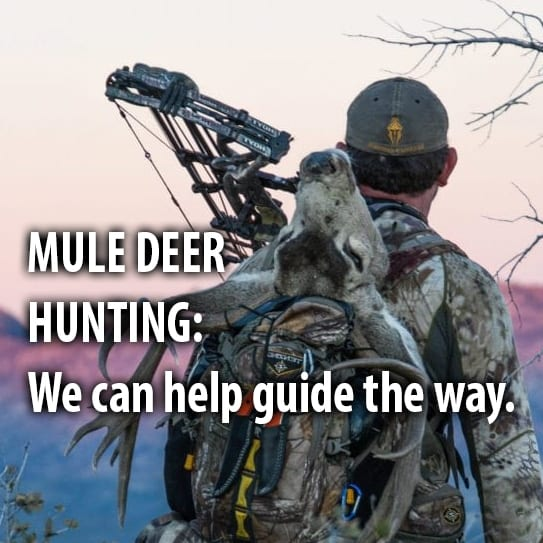 We can help guide your way to a more successful mule deer hunt